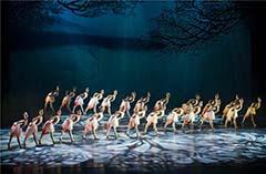 歌舞团——舞剧《朱鹮》